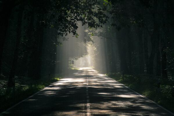 Asphalt road with light between trees